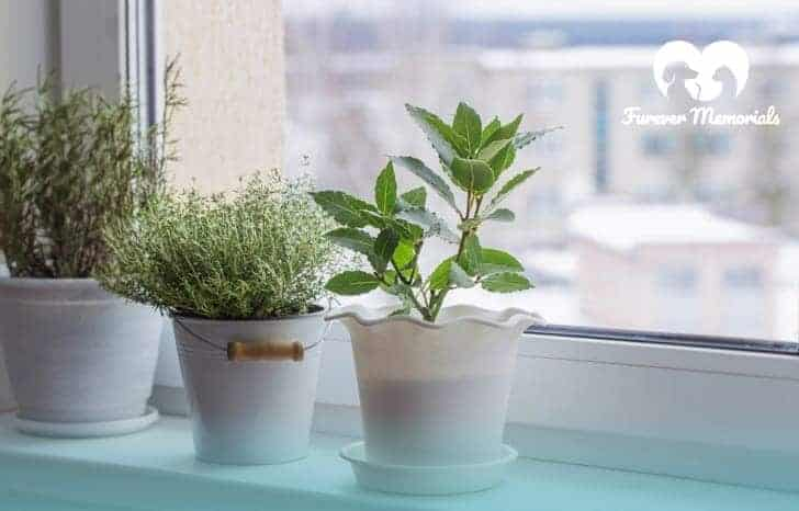 Grow a Houseplant in Your Pet's Ashes